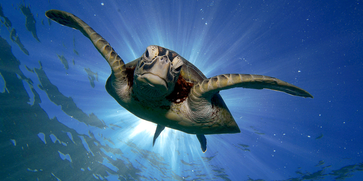 WWF World Sea Turtle Day